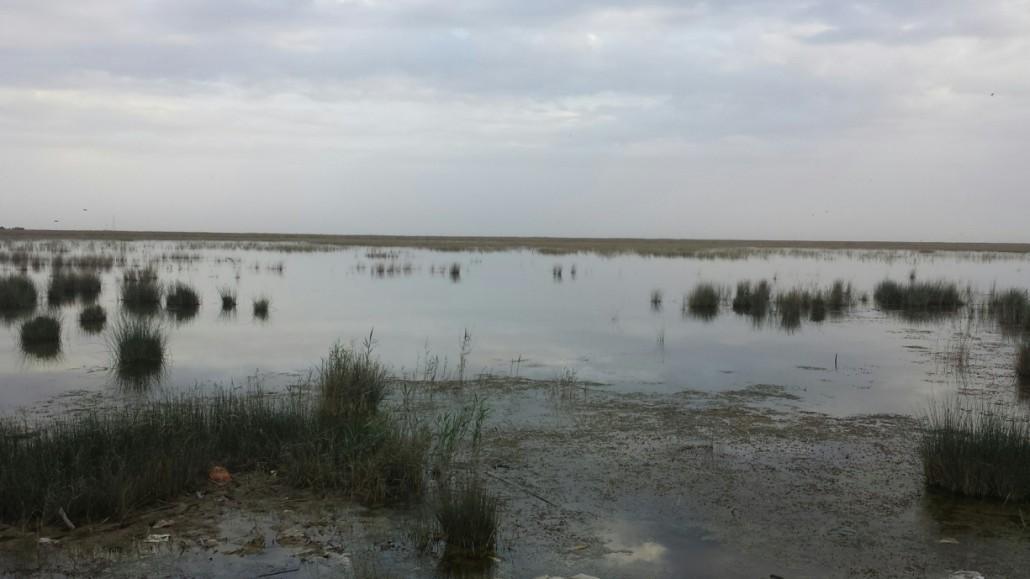 شادگان- خوزستان