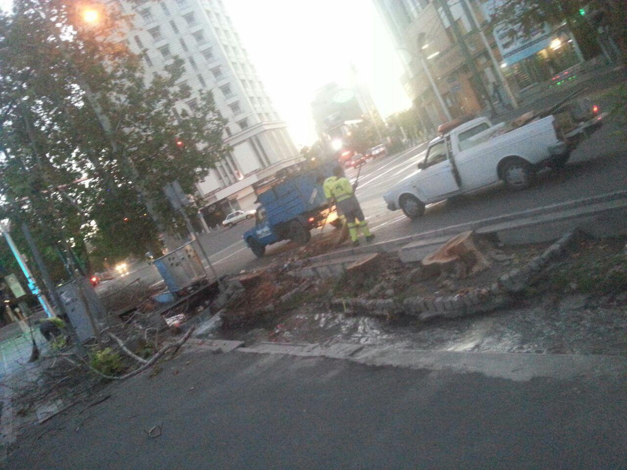 قطع شبانه درختان خیابان ولیعصر از سوی شهرداری تهران