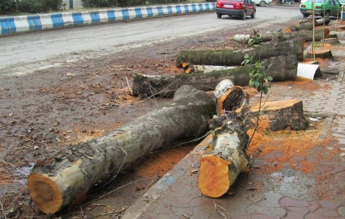 کاهش جریمه قطع درختان تهران
