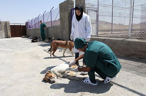 کشتن ۵۷۰۰ سگ از ابتدا سال تاکنون در مشهدزمان مطالعه: 1 دقیقه