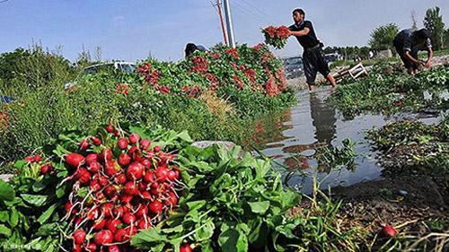 آبیاری سبزیجات با فاضلاب؛ دلیل بروز موارد وبا در کشور
