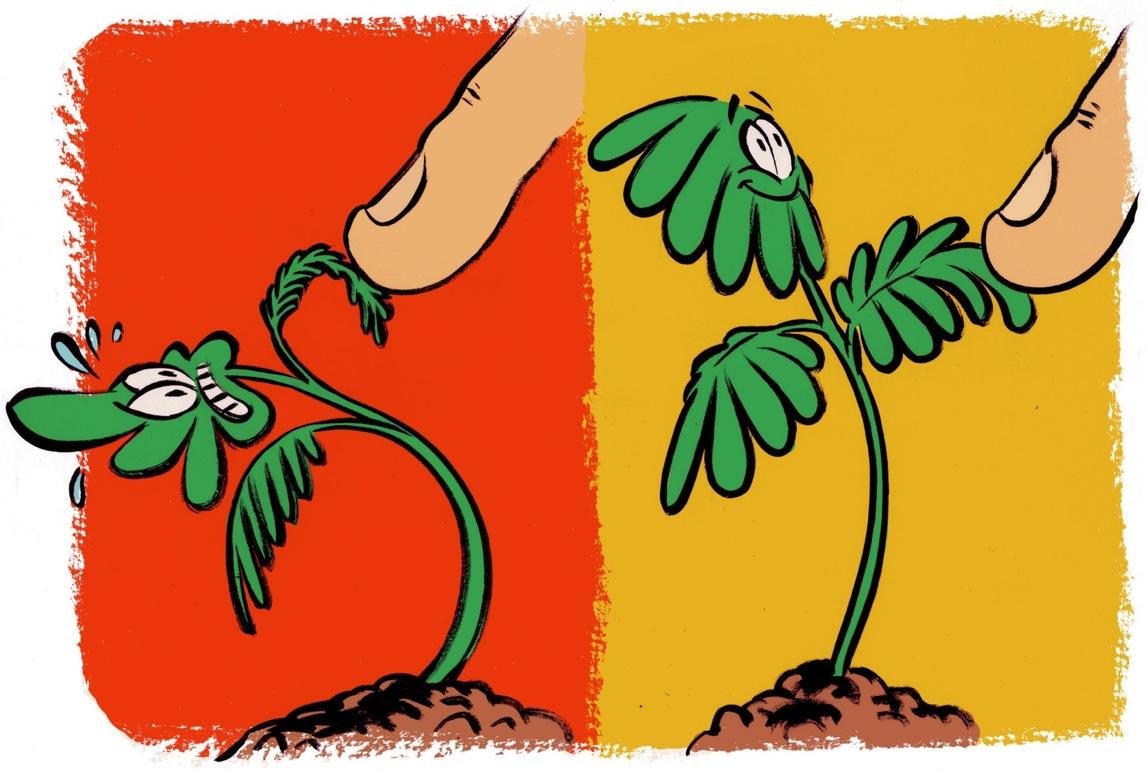 گیاهان یاد میگیرند و فراموش میکنند