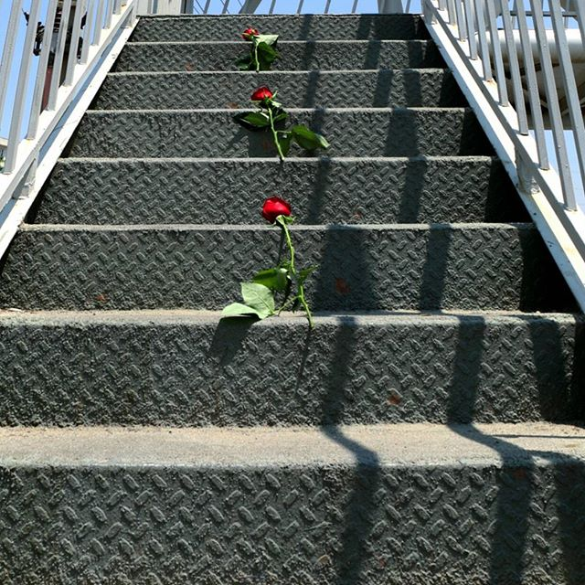 خودکشی ممنوع یا چگونه با گلهای سرخ به جنگ ناامیدی برویم
