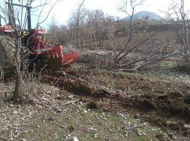 قلع و قمع بلوطهای زاگرس برای ایجاد مزارع کشاورزی