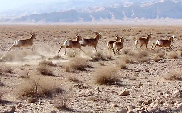 تقاضای آژانسهای مسافرتی برای تور شکار