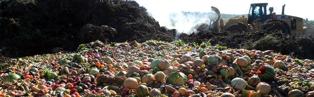 نیمی از غذای تولید شده در آمریکا به دور انداخته میشود