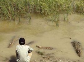اهالی روستای کشاری و تمساحها آب آشامیدنیشان را با هم قسمت میکنند