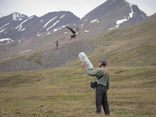 انتشار بزرگترین آرشیو صوتی جهان از طبیعتزمان مطالعه: ۲ دقیقه