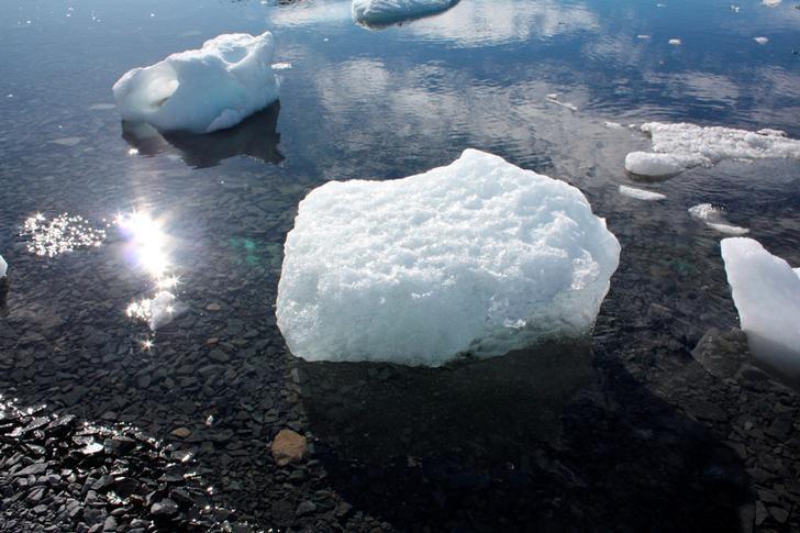 مهاجرت آبزیان به نقاط قطبی در نتیجه گرمایش زمین