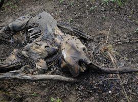 دو سوم حیوانات وحشی تا سال ۲۰۲۰ نابود خواهند شد