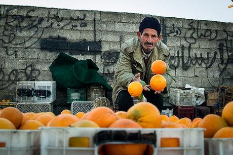 پرتقال صادراتی ۷ برابر ارزانتر از بازار داخلی