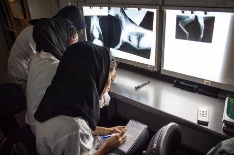دولت به دنبال حذف حق اشعه رادیولوژیستها