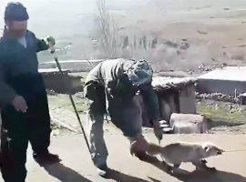 بازداشت عاملان سلاخی روباه پیرانشهر