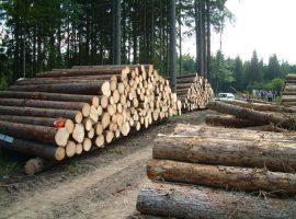ممنوعیت بهرهبرداری از جنگلهای شمال از سال آینده