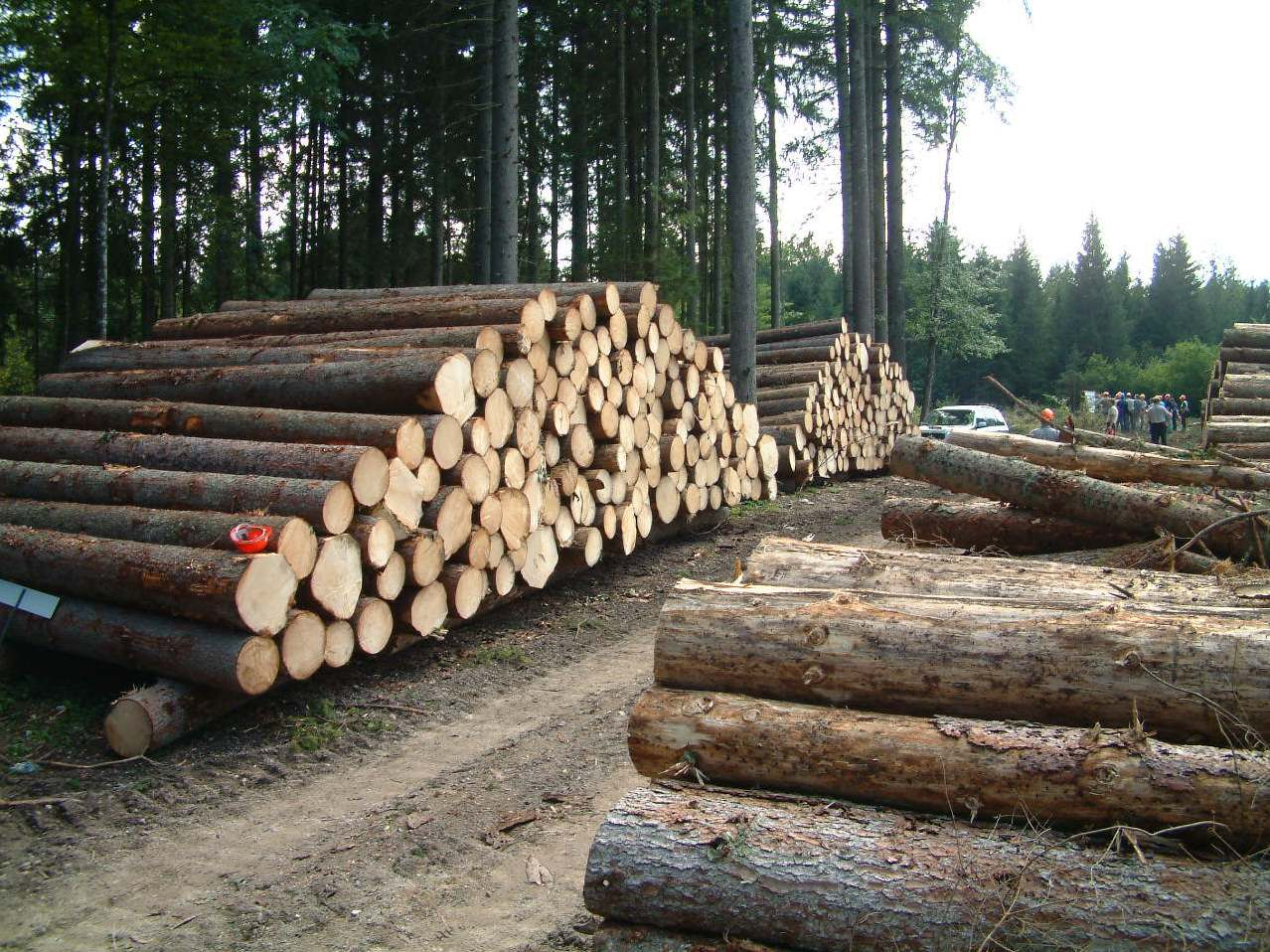 تصویب ممنوعیت بهرهبرداری تجاری از جنگلهای شمال