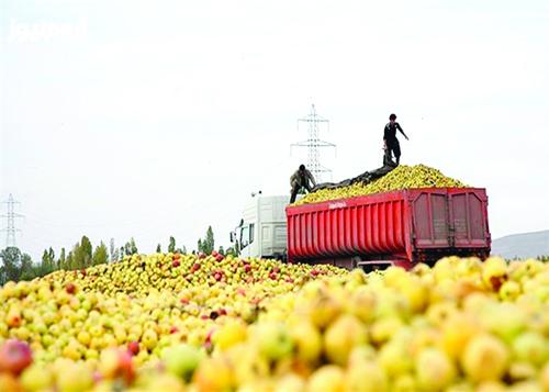 صادرات نمایشی سیب به بیابانهای عراق