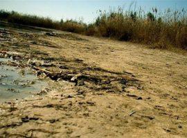 یک میلیون هکتار از تالابهای کشور خشک شده