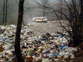 جنگل زیر خروارها زباله