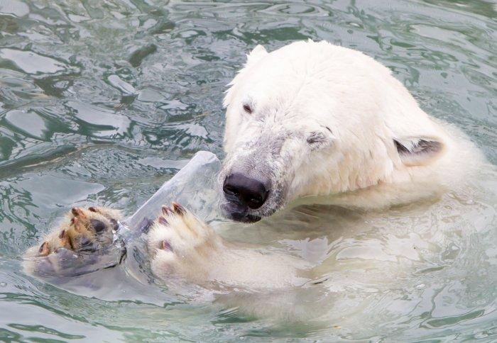 آلودگی قطب شمال با زبالههای پلاستیکی امریکا و اروپا