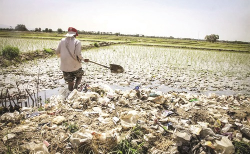 درخواست از دادستانی برای توقف آبیاری مزارع با فاضلاب