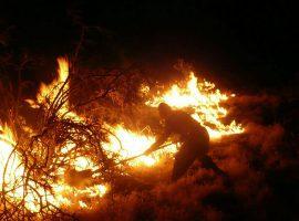 آتش در حال بلعیدن پناهگاه حیات وحش میانکاله است