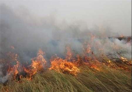 آتشسوزی عمدی در تالاب انزلی با هدف تصرف زمین