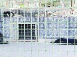 زندانهایی برای حیوانات