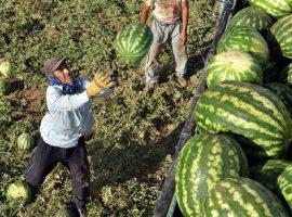 افزایش ۲۹ درصدی صادرات آب به نام هندوانه