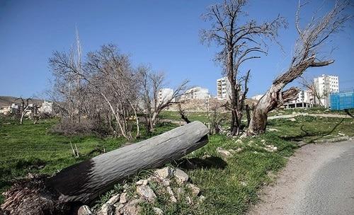 نابودی ۱۱۳اصله درخت باغی در آجودانیه