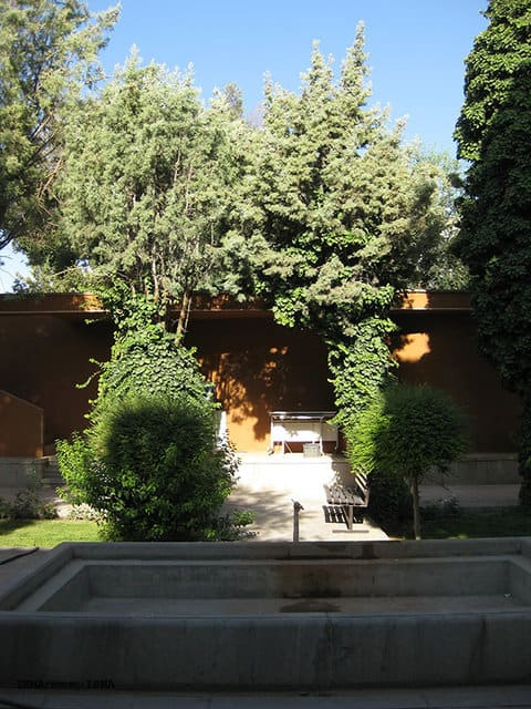 سلاخی درختان ۲۰ ساله در دانشگاه هنر اصفهان
