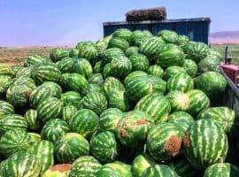 هر سال یک سد کرج هندوانه صادر میکنیم
