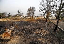 درختان پادگان ۰۶ همچنان درحال نابودیاند