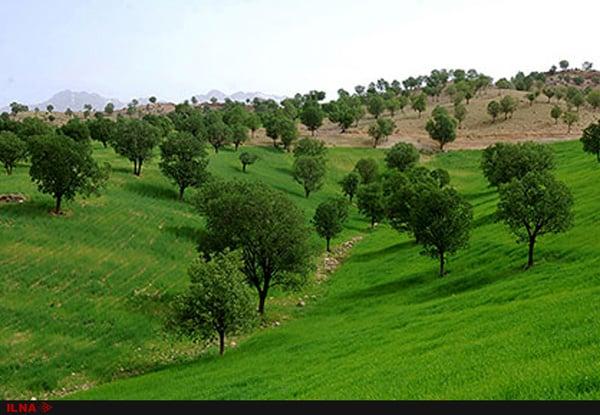 پارک جنگلی یاسوج به وزارت نفت واگذار میشود