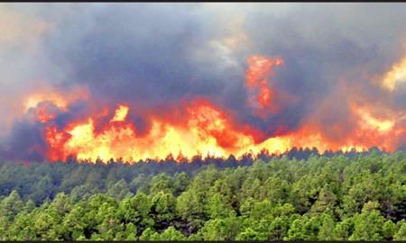 سالانه ۱۵هزار هکتار از جنگلهای ایران در آتش میسوزد