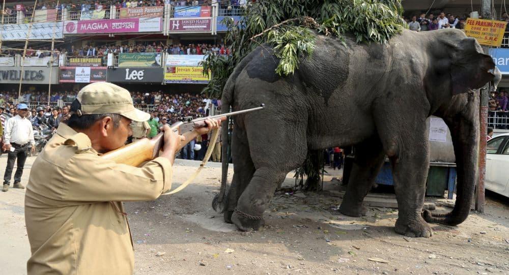 کشتن یک فیل
