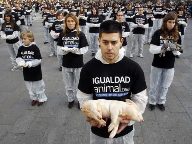 بهرهکشی از حیوانات در جامعه نابرابر انسانی