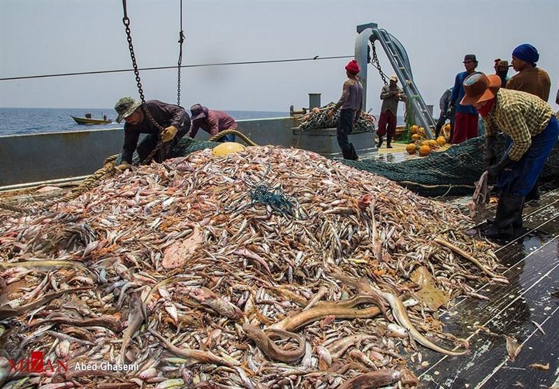 تایید قرارداد اجاره بلندمدت چینیها برای ماهیگیری در دریای عمان