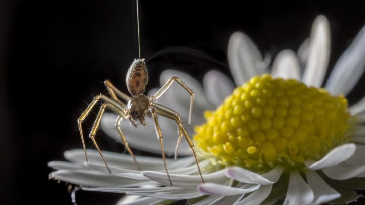 پرواز برقی عنکبوتها تا صدها مایل دورتر