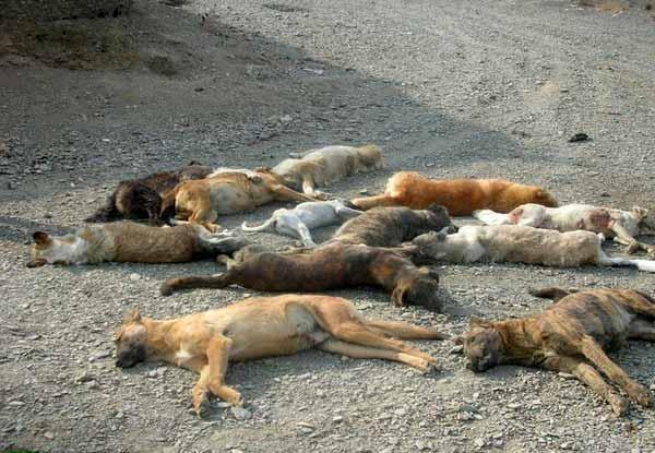 بیش از ۲۰۰ قلاده سگ شب گذشته در اهواز قتلعام و سوزانده شدند
