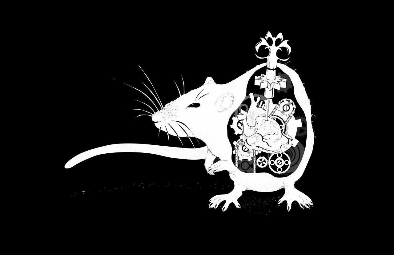موش سایبورگی در کنترل انسان