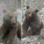 توله خرس سوادکوه