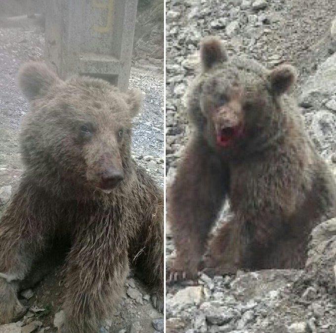 از بافق تا میاندشت و کشتن خرس سوادکوه