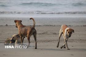 اعتراض هواداران حقوق حیوانات به سگکشی شهرداری