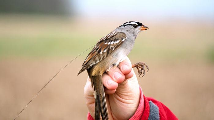 بیاشتهایی عصبی پرندگان مهاجر