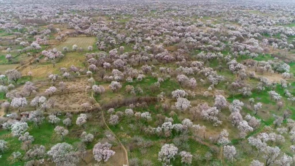 نامه کنشگران قزوین به رئیس جمهور برای نجات باغستان شهر