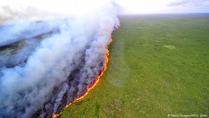 بانکهای بزرگ جهان در تخریب جنگلهای استوایی نقش دارند