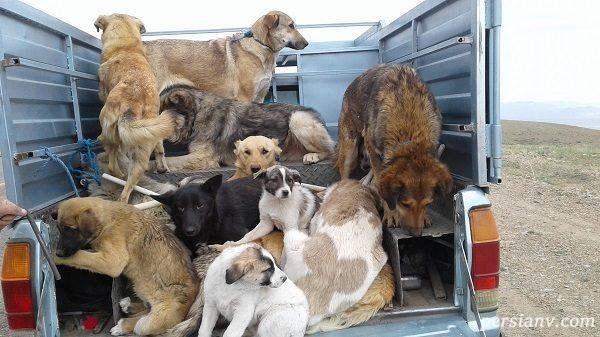 فراخوان مشارکت عمومی در تدوین لایحۀ قانونی حمایت از حیوانات