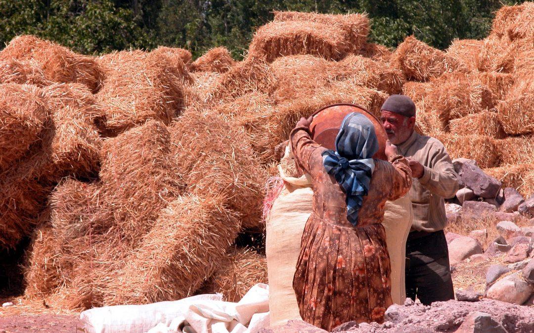 امروز روز جهانی زنان روستایی است