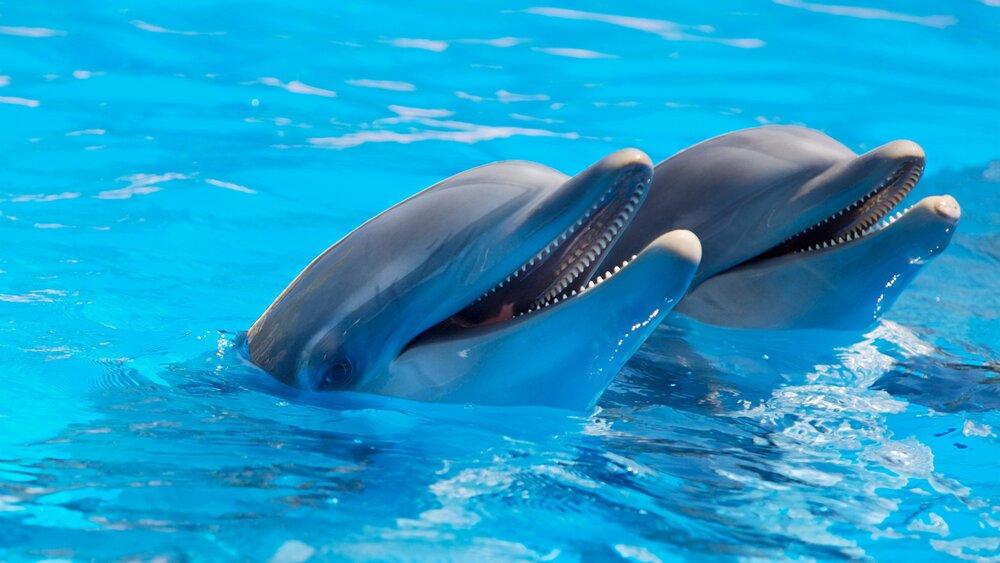 پنهانکاری درباره دلفینی که در اسارت مرد