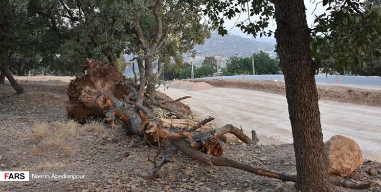 ۴ هزار متر مربع از جنگلهای کهگیلویه تخریب میشود